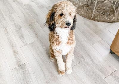 pet friendly floor installations naples florida